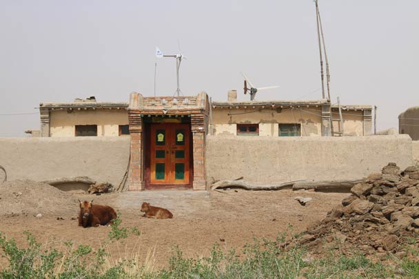 Two cows in front of a house - Alashan Desert, Inner Mongolia, 2014/05
