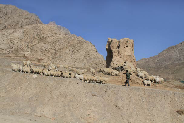 More sheep, and the remnants of some Han Dynasty Great Wall - Alashan Desert, Inner Mongolia, 2014/05