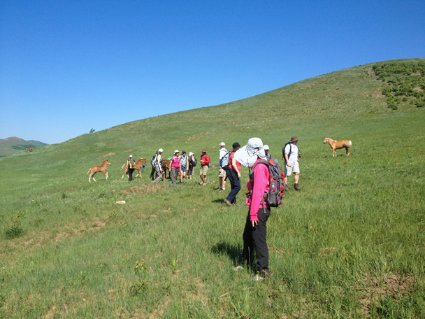 Some horses got themselves mixed up with hikers, with two ponies trying to get back to their mother - Bashang Grasslands trip, 2014/06