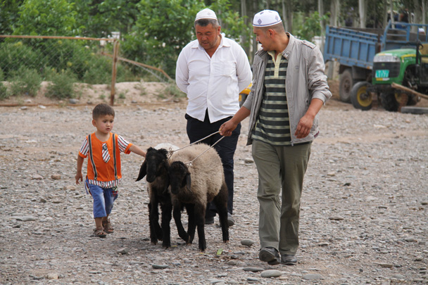 Taking the sheep to market - Along the Silk Road from Korla to Kashgar, 2014/06