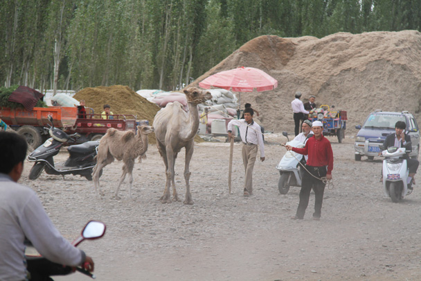Camels at the livestock market - Along the Silk Road from Korla to Kashgar, 2014/06