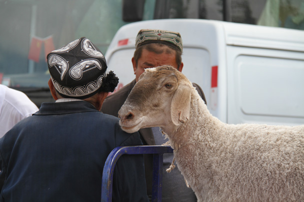 Sheep - Along the Silk Road from Korla to Kashgar, 2014/06