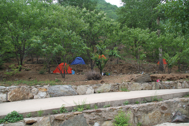 On the second night we set up camp in another chestnut orchard, below another line of Great Wall - School Camping trip, 2014/6