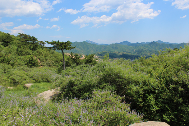 A view of the hills behind Longevity Village - Flower Wood to the Silver Pagodas, 2014/6/28