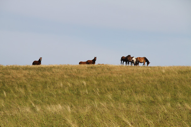 Horse in the grass - Hulunbuir Grasslands, Inner Mongolia, 2014/07