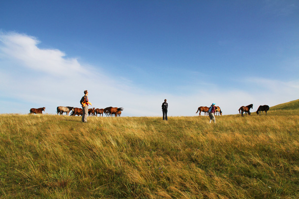 We walked over for a closer look at the horses - Hulunbuir Grasslands, Inner Mongolia, 2014/07
