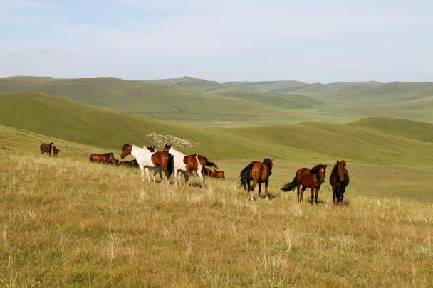 Classic grassland scenery - Hulunbuir Grasslands, Inner Mongolia, 2014/07