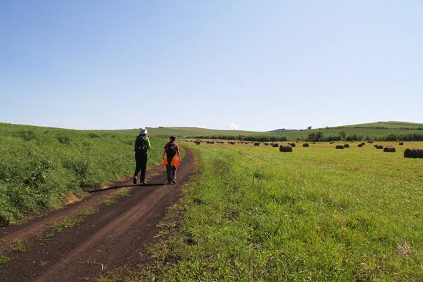 We walked through a farming area, with rolls of hay baled up - Hulunbuir Grasslands, Inner Mongolia, 2014/07