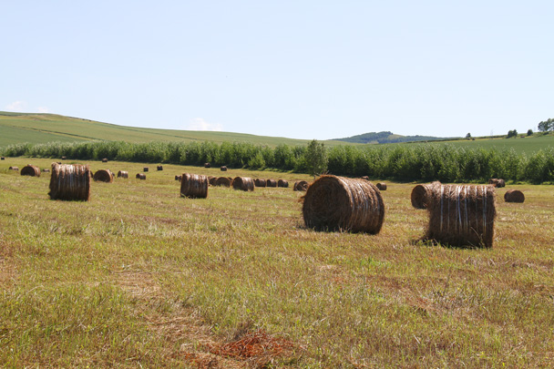 A closer look at the haybales - Hulunbuir Grasslands, Inner Mongolia, 2014/07