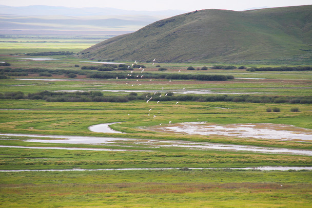 Flocks of birds over the wetlands - Hulunbuir Grasslands, Inner Mongolia, 2014/07