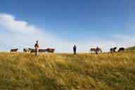 Hulunbuir Grasslands, Inner Mongolia, 2014/07