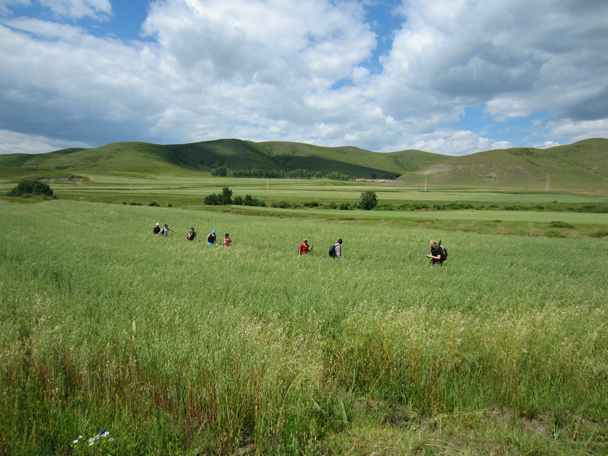 The grass had grown tall over summer - Bashang Grasslands trip, August 2014