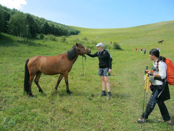 We hiked past another friendly horse - Bashang Grasslands trip, August 2014
