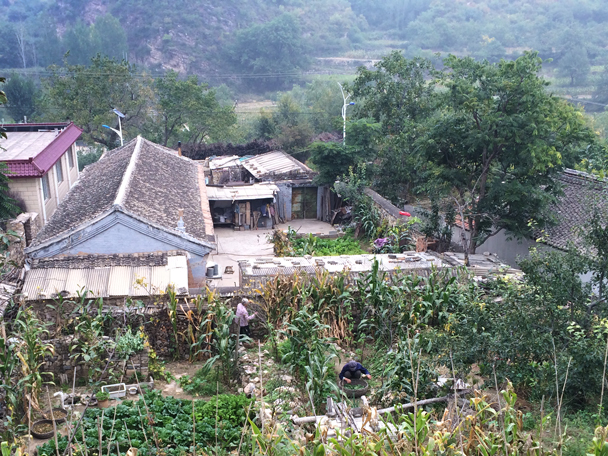 A shot of the backyard vegetable gardens in the village - Changyucheng Walled Village hike and Countryside Opera Performance, 2014/09/21