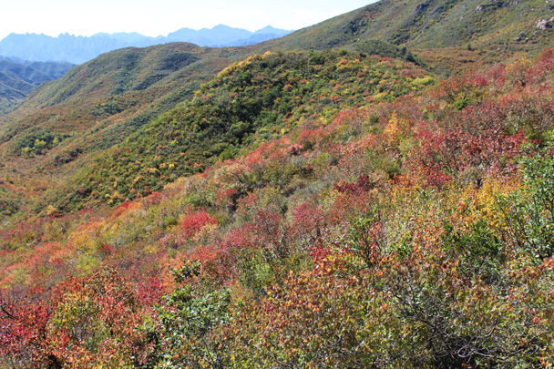 Patches of colour in the mountains - Yanqing Great Wall and High tower, 2014/09/27