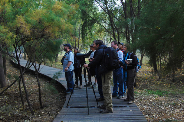 We set up on a boardwalk in the wetlands park - Beidaihe Birding Trip, 2014/10