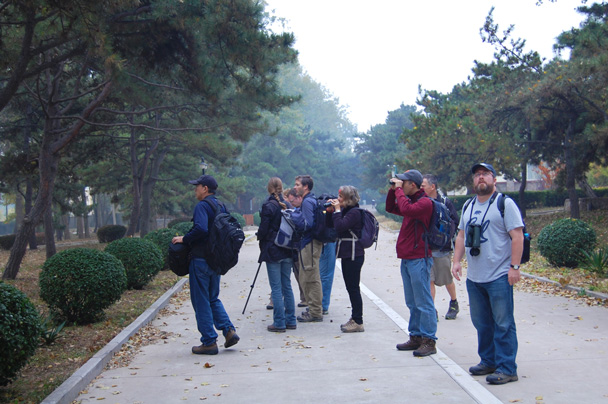 There were some birds to see in the park near our hotel - Beidaihe Birding Trip, 2014/10