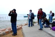 Beidaihe Birding Trip, 2014/10