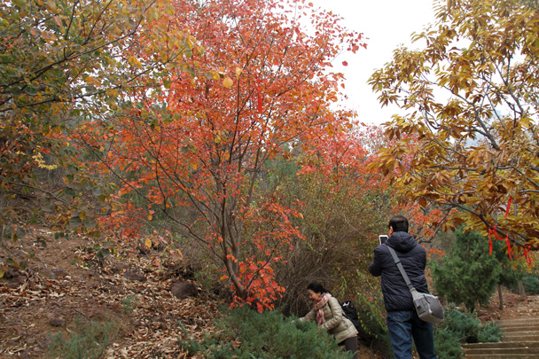 Autumn colours in the trees - Yajishan Taoist Temples hike, 2014/10