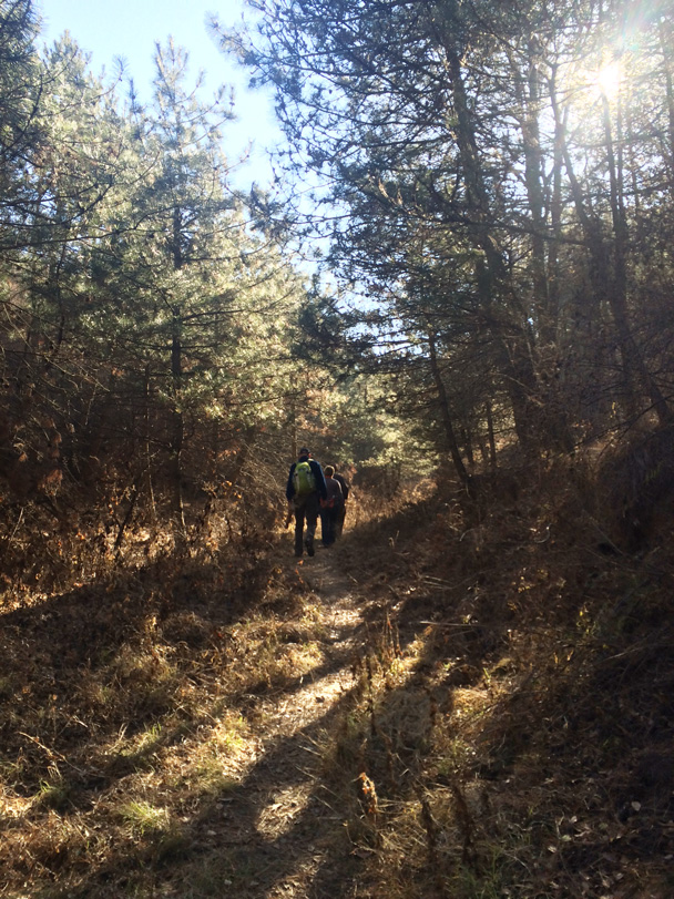 Sunlight filtering through the forest canopy makes a pleasant sight - Cypress Wells Canyon hike, 2014/11/09