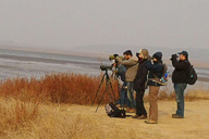 Miyun Reservoir Birdwatching Overnighter, 2014/11