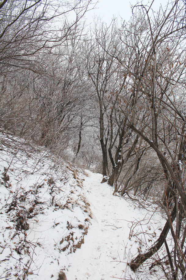 The trail to the end took us along snowed-over hill trails - Nine-Eyes Tower snow hike, 2015/02/20