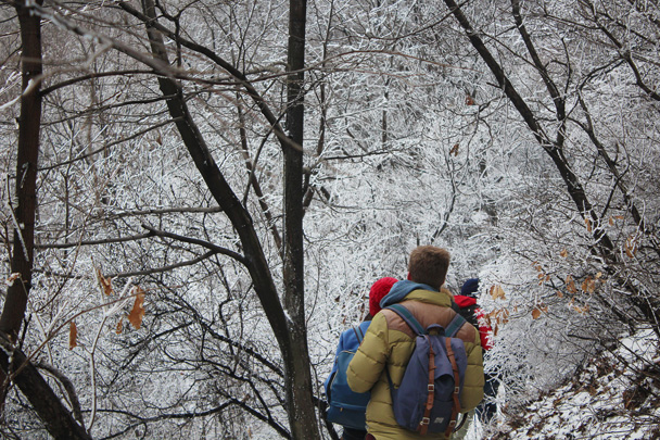 This detour around a broken section of wall took us through trees frosted with ice - Middle Route of Switchback Great Wall, 2015/02/21