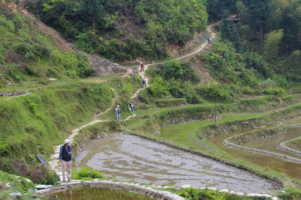Walking through the rice terraces might require some balancing skills - Miao and Dong culture in Guizhou, 2015/04