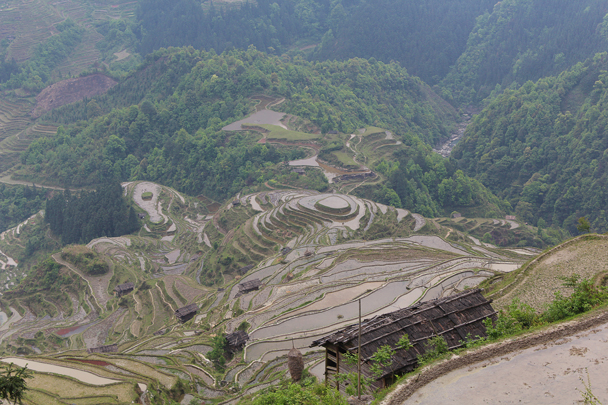 The rice terraces look incredible - Miao and Dong culture in Guizhou, 2015/04