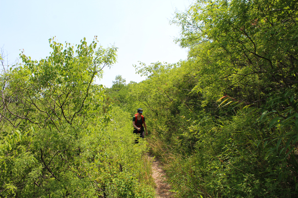 Lovely greenery on the trail to the wall - Great Wall Spur Camping, 2015/05