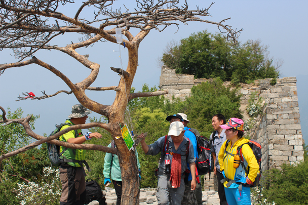 Some colourful local hikers - Great Wall Spur Camping, 2015/05