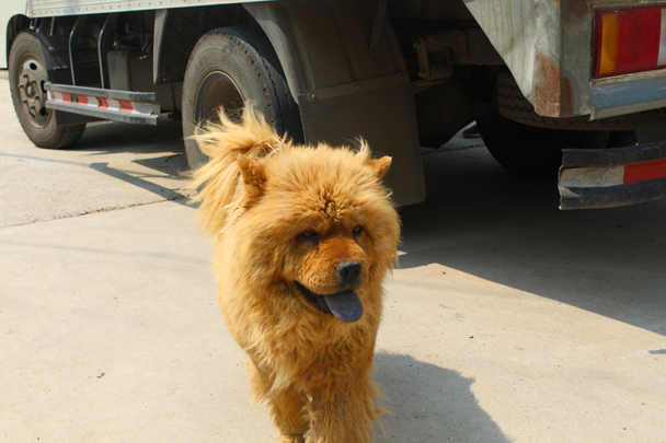 A friendly village dog followed us for a while - Great Wall Spur Camping trip, May 2015