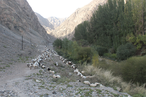 We stopped off for hikes along the way. Here we hiked up into a narrow valley, sharing the trail with sheep - Along the Silk Road from Korla to Kashgar, 2015/09