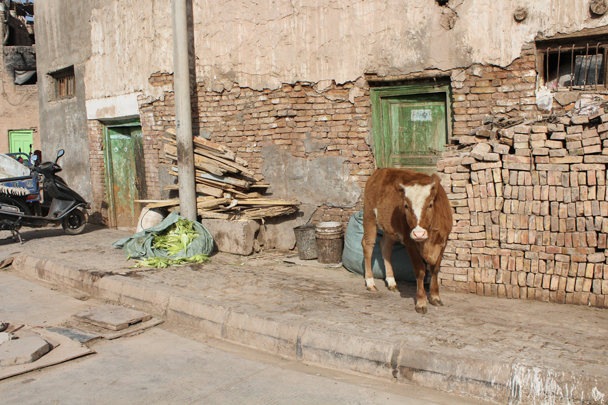 A cow?! - Along the Silk Road from Korla to Kashgar, 2015/09