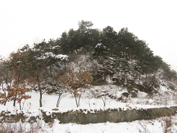 A stand of pine trees above a stream. A nearby reservoir was frozen solid; the stream was still flowing - Flower Wood Hillwalking Challenge, 2015/11/28