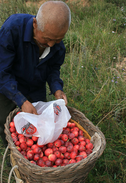 Farmer and a basket of crab-apples, spotted on a hike in September 2010