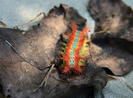 Caterpillar, spotted on a hike in September 2010