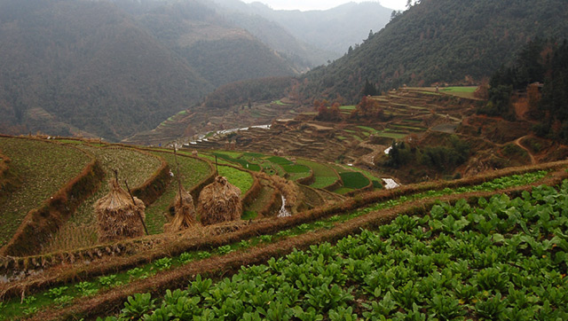 The terraces and fields below Basha Village