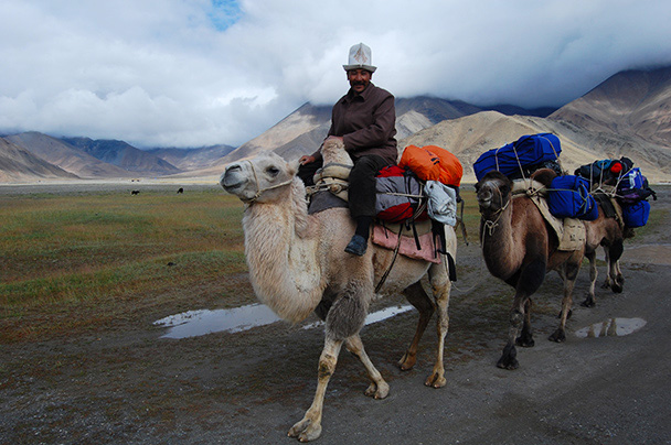 Our camel team, with the Kyrgyz herdsman wearing his nifty hat, Beijing Hikers Kashgar and Lake Karakul trip 2013/08/20