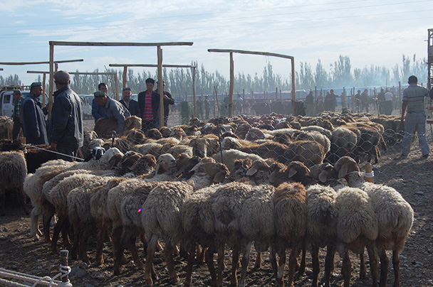 The line up at the busy livestock market, Beijing Hikers Kashgar and Lake Karakul trip 2013/08/20