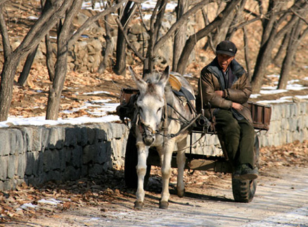 Donkey and cart, Beijing Hikers Triangle Hike, 2009-11-22