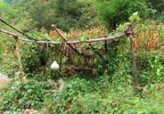 20160922-Hemp-Village-to-Gubeikou-Great-Wall-(01)