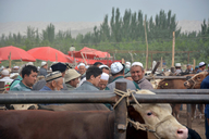 20160606-12-Silk-Road-Korla-To-Kashgar-(74)