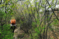 20170420-Great-Wall-Spur-(10)