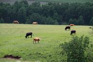 Hebei-Bashang-Grasslands-(39)