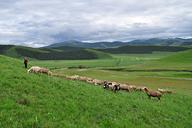 Hebei-Bashang-Grasslands-(57)