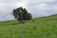 Hebei-Bashang-Grasslands-(58)