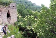20160612-Jiankou-to-Mutianyu-Great-Wall-(09)